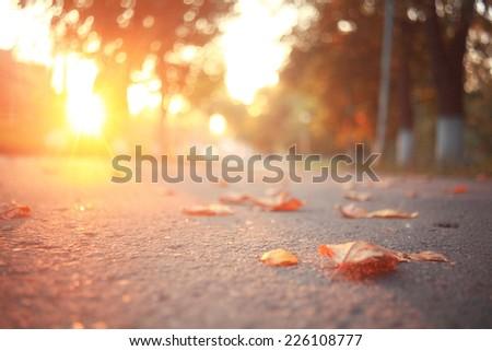 yellow leaves on an asphalt blurred urban background autumn - stock photo