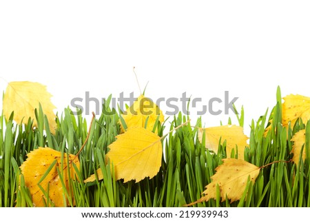 Yellow leaves on green grass, isolated on white background - stock photo