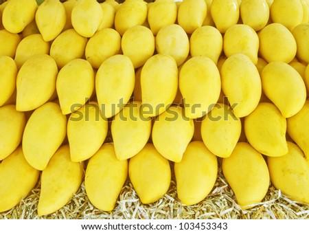 yellow mango, Thailand - stock photo