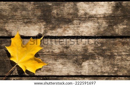 Yellow maple leaf background with copy space - stock photo