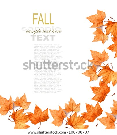 yellow maple leaf on white background - stock photo