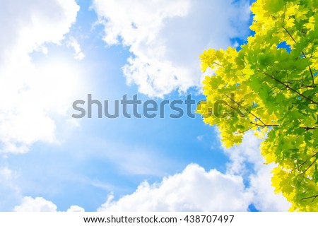 yellow maple leaves and blue sky with clouds, sun - stock photo