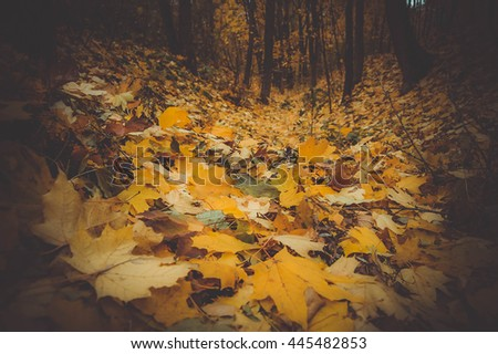 yellow maple leaves on the ground in the fall, dark filter - stock photo