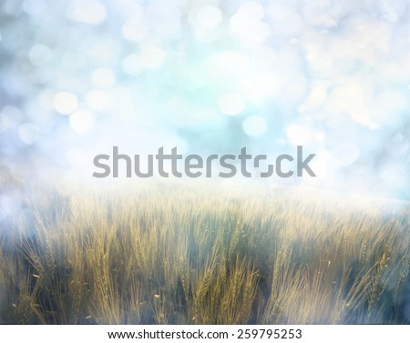 Yellow meadow under sky with  bokeh - stock photo