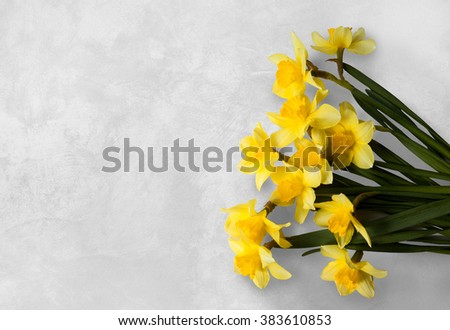 Yellow narcissus on a white textured background. Easter, March 8, valentine's day, mother's day - stock photo