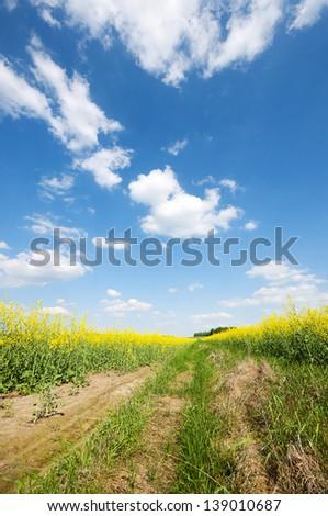 Yellow oilseed rape field under the blue sky - stock photo