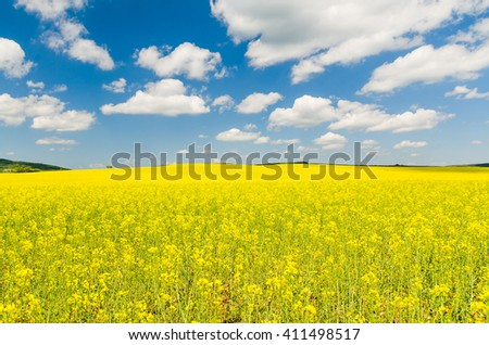 Yellow oilseed rape field under the blue sky with sun - stock photo