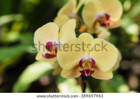 Yellow orchid flowers closeup for background - stock photo