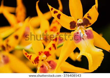 Yellow orchids - stock photo