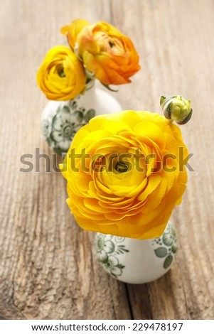 Yellow persian buttercup flowers (ranunculus) on wooden background. - stock photo