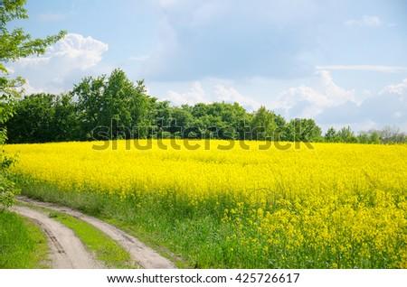 Yellow rapeseed field and old dirt road under blue sky. Brassica napus. Trakhtemyriv, Ukraine - stock photo