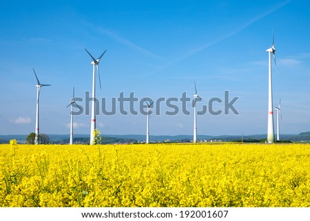 Yellow rapeseed field and windwheels - stock photo