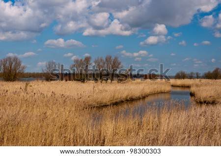 Yellow reeds along a small creek  in Dutch wetlands and a blue sky with typical clouds. - stock photo