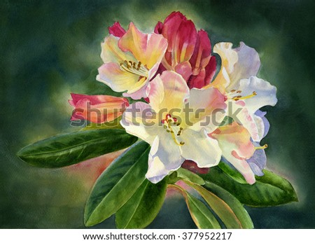 hispanic singles in rhododendron This offering is for single plants of this variety these are growing in 2 inch containers azalea: red ruffle latin name: rhododendron red ruffle (belgian hybrid.
