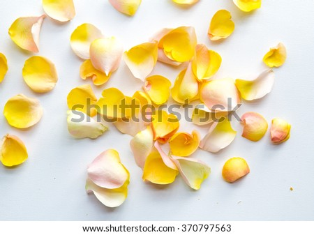 yellow rose petals on a white fabric - stock photo