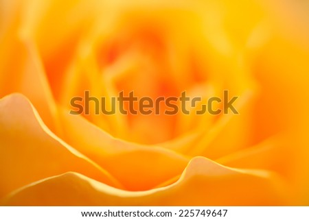 Yellow Rose Smooth Shallow Depth of Field - stock photo