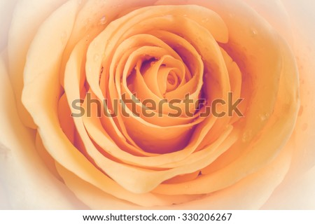 Yellow rose. Vintage style image - stock photo