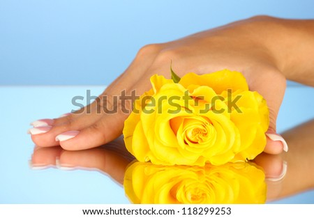 Yellow rose with woman's hand on blue background, close-up - stock photo
