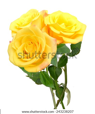 Yellow roses bunch isolated on white background.  - stock photo