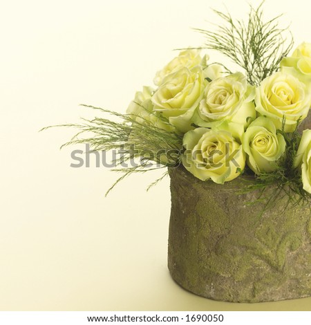 Yellow roses in a pot. - stock photo