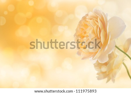 Yellow roses on bokeh light effect background - stock photo