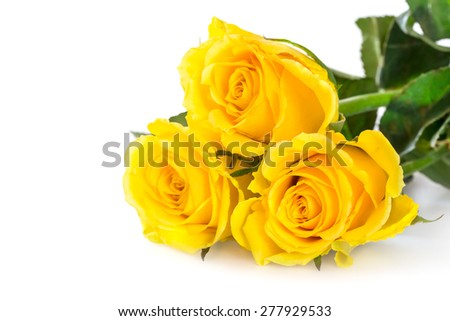 Yellow roses over white background - stock photo