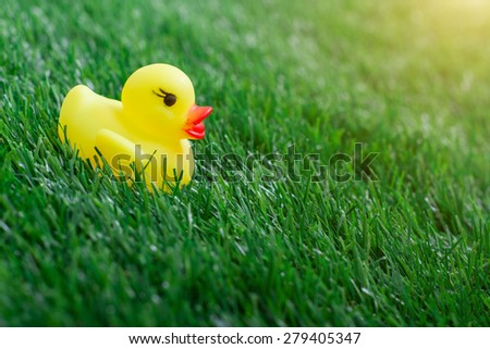 Yellow rubber duck on green grass background - stock photo