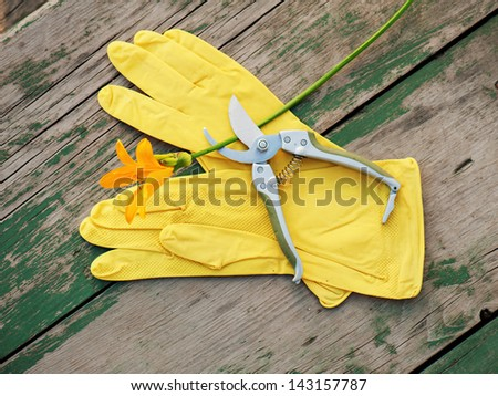 Yellow rubber gloves, lily and garden pruner on wooden background. Closeup. - stock photo