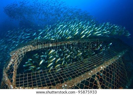 Yellow school fish in a cage underwater - stock photo