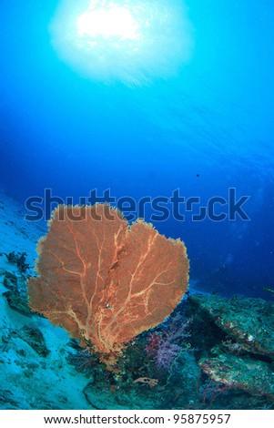 Yellow seafan against sunlight - stock photo