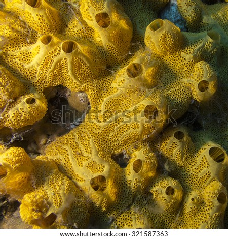 Yellow sponge on bottom of tropical sea, underwater - stock photo