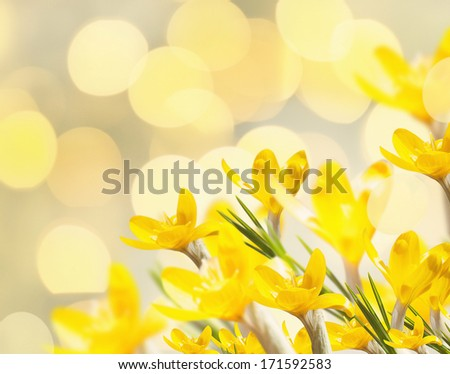 yellow spring flowers - stock photo