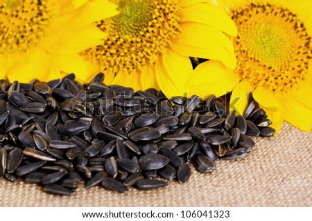 Yellow sunflowers on sacking and a handful of sunflower seeds - stock photo