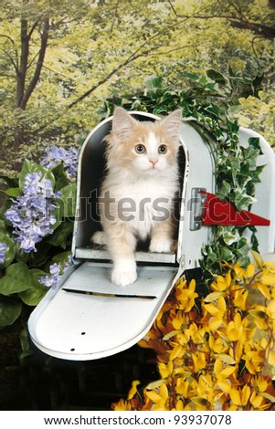 Yellow Tabby Kitten in a Mail Box - stock photo