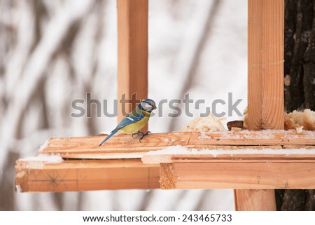 Yellow tit bird sits on the bird feeder in winter time - stock photo