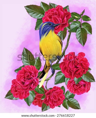 Yellow tit on a branch of a red rose - stock photo