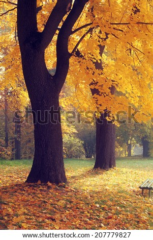 yellow tree and leaves in fall season at the park - stock photo