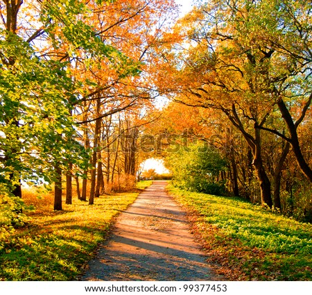 Yellow Trees Cold Skies - stock photo