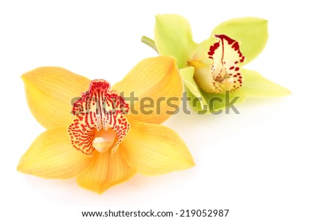 Yellow tropical orchid flower isolated on white - stock photo