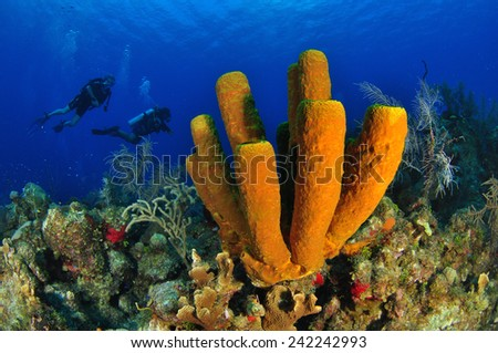 Yellow Tube Sponge with divers, Grand Cayman - stock photo