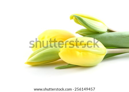 Yellow tulip flowers isolated over a white background - stock photo