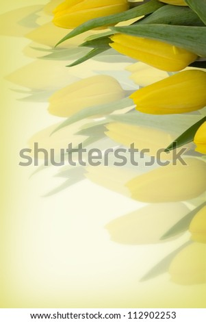 Yellow tulips background with free space for text - stock photo