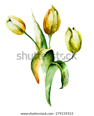 Yellow Tulips flowers, watercolor illustration