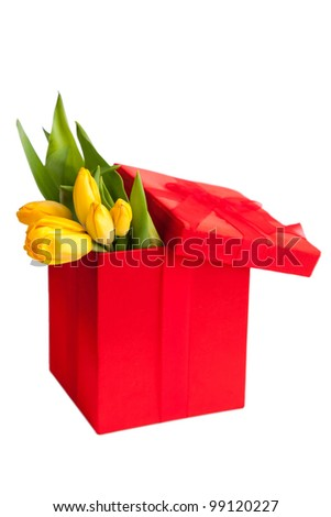 Yellow tulips in festive red box isolated on a white background - stock photo