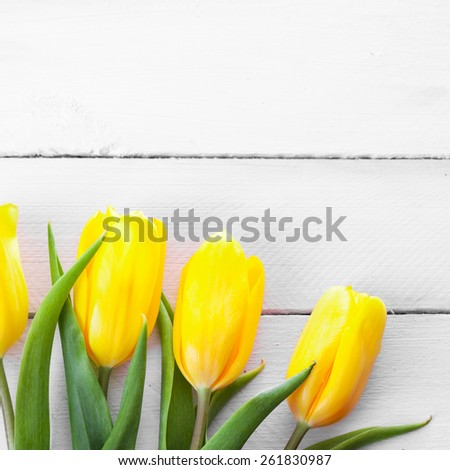 Yellow tulips on a wooden surface. Studio photography. - stock photo