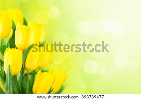 Yellow tulips on green background with space for message.  Mother's Day background. Soft focus. - stock photo