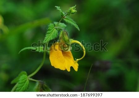 Yellow wildflower on bokeh green background - stock photo