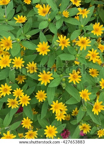 Yellow wildflowers bush are blooming in the spring - stock photo
