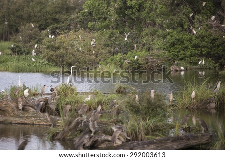 Yilan, Taiwan - JUN 9: Wildlife and floating woods at Luodong Forestry Culture Garden in Yilan, Taiwan on June 9 2015. It was a forestry factory in the past. - stock photo