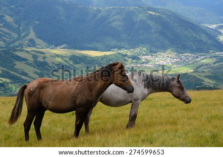 Yin yang black and white horses  feeding on the mountain pasture with mountains and village in background - stock photo